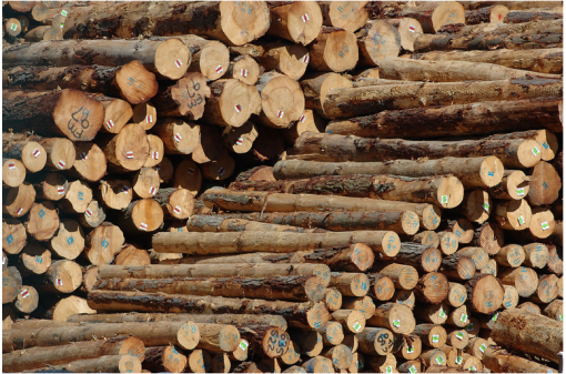 Logs - Tags and Forestry solutions